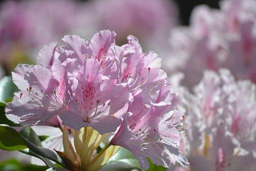 На сегодняшний день материалы для косметических средств производятся из следующих растений: альпийская роза (рододендрон), швейцарское яблоко, виноград, окопник, аргана, сапонария пумила.